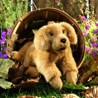 Folkmanis Handpuppe Golden Retriever Welpe 2862